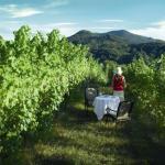 Auf den Euganeischen Hügeln
