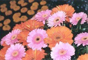 In der Blumenhalle: Farbenpracht über 170 Tage