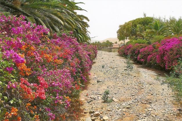 Die älteste Kanareninsel überrascht immer wieder mit farbenprächtig blühenden Sträuchern inmitten einer mondähnlichen Landschaft