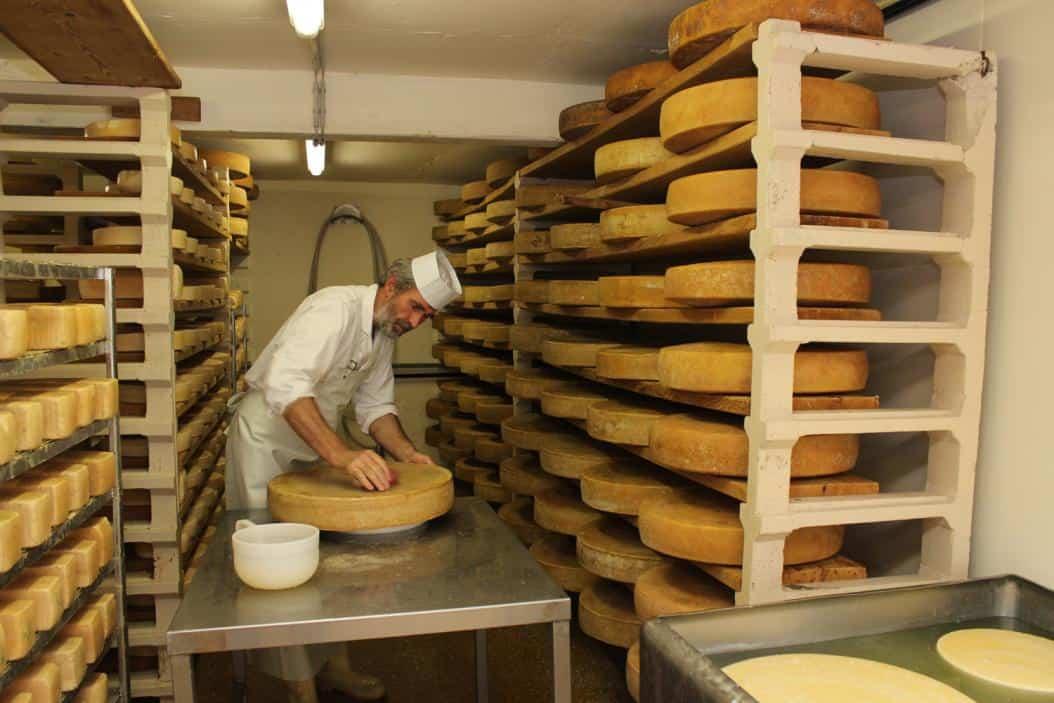 Der Käseweltmeister beim Abreiben der Käselaibe mit Salzwasser