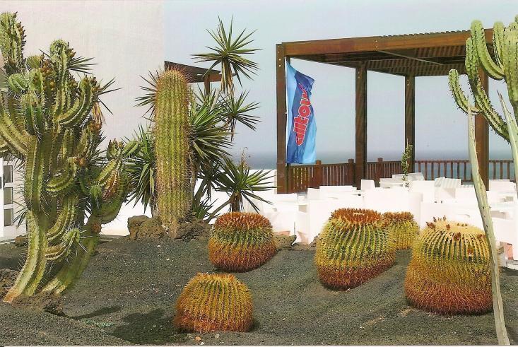 Kakteen prägen die großzügige Hotellandschaft des Jandia Princess Resort & SPA
