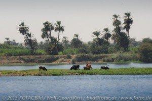 CTOUR vor Ort: Ägypten im Umbruch - Fotoimpressionen, Teil 2: Gesichter des Nil 9