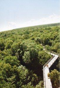 Der Baumkronenpfad im Nationalpark Hainich. In lichter Höhe führt der Weg zum Baumturm. Aus einer Höhe von 44 Metern reicht der Blick weit über die Spitzen der Baumspitzen. Und manchmal verspürest Du über den Gipfeln die Ruh´...