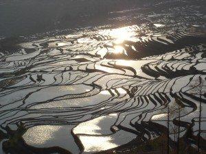 Reisterrassen in Yuangyang