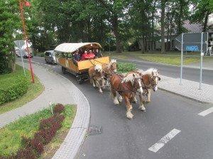 Mit dem Kremser auf der Spargelstraße unterwegs
