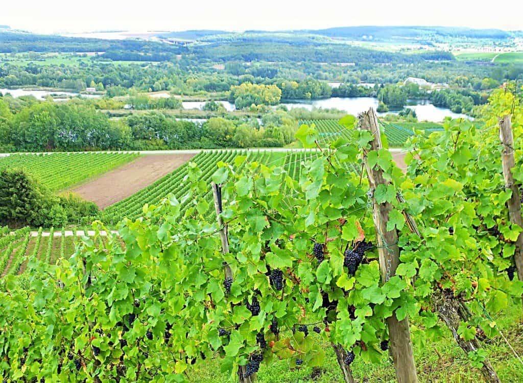 Die typische sanfthügelige Landschaft des Moseltals mit ihren ergiebigen Weinbergen - hier bei Remerschen