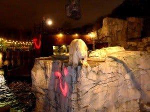 Der abendliche Besuch bei den Eisbären im Zoo von Hannover passte zum nass-kalten Wetter Fotos: Bernd Siegmund