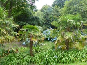 Tropischer Garten Coleton Fishacre