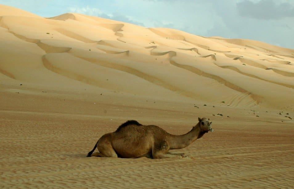 Dünen in der Wüste Wahiba Sands Foto: Dr. Harald Schmidt