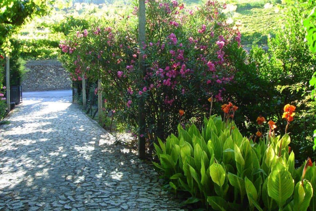 CTOUR on Tour: Goldener Herbst am Douro - eine Portwein-Meditation 29