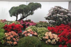 CTOUR vor Ort: Mit der Seilbahn zum internationalen Gartenfestival in Berlin 4