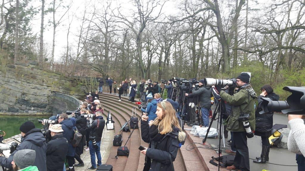 CTOUR-News: Glanzvolle Eisbärbaby-Premiere im Tierpark Berlin 4